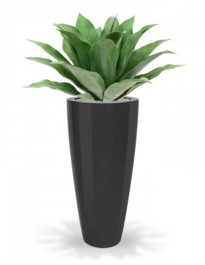 agave_planter