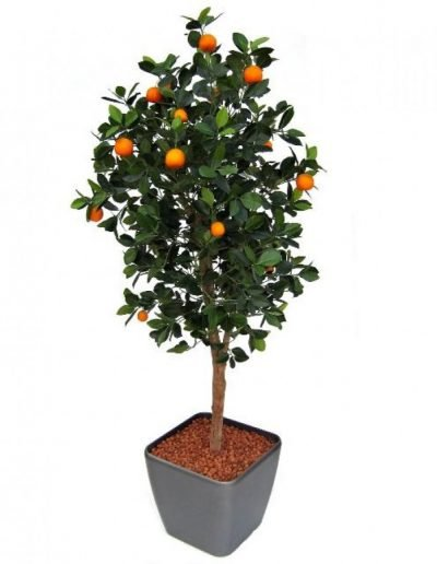 orange tree 150cm