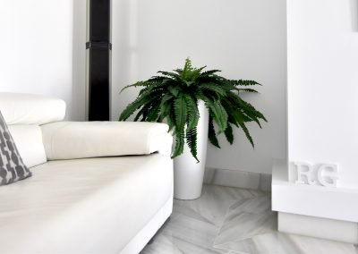 Boston Fern Tall planter